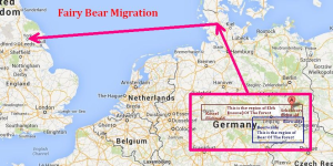 Fairy-Bear-migration